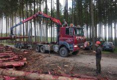 Lesy ČR posílají Moravě peníze i dřevo
