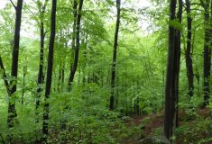 Zapsání Jizerskohorských bučin na seznam UNESCO  je také oceněním práce lesníků