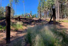 Lesy ČR vyhlásily tendr na provádění lesnických prací od roku 2022