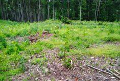 Hodnocení nabídek podaných v lesnickém tendru Lesů ČR začalo
